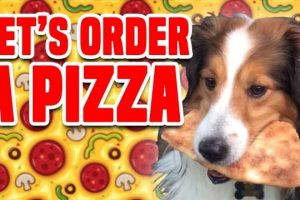 Lets-Order-A-Pizza-Best-Pizza-Compilation