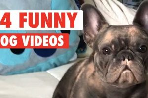 14-Funny-Dogs-Video-Compilation-2017