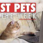 Best Pets of the Week | November 2017 Week 1