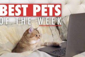 Best-Pets-of-the-Week-November-2017-Week-1