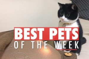 Best-Pets-of-the-Week-November-2017-Week-2