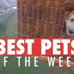 Best Pets of the Week | November 2017 Week 3