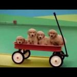 Dog Rube Goldberg Machine