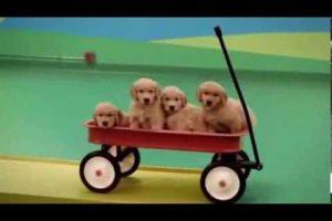 Dog-Goldberg-Machine-by-Beneful