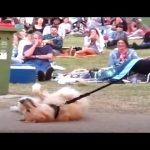 Dog PLAYS DEAD to Avoid Going Home While Park Crowd Watches