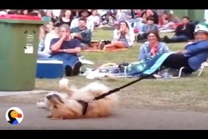 Dog-PLAYS-DEAD-to-Avoid-Going-Home-While-Park-Crowd-Watches-The-Dodo