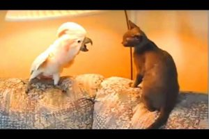 Funny-Parrots-Meowing-Better-Than-Cats-Compilation-NEW