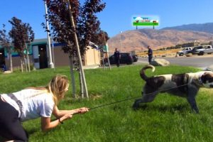 Hope-For-Paws-rescuer-dragged-by-110-pound-dog-as-she-tried-to-save-him-EPIC-VIDEO