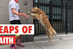 Leaps-of-Faith-Funny-Animal-Jumps-Compilation
