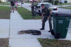 Pasco-Sheriffs-Deputy-wrangles-gator-in-Lutz