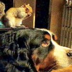 Rescued Squirrel Loves Dog Brother