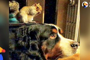 Rescued-Squirrel-Loves-Dog-Brother-The-Dodo-Odd-Couples