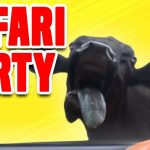 Safari Party | Funny Safari Park Compilation