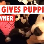 Sweet Pitbull Gives Her Newborn Puppies To Owner