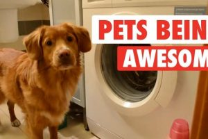 The-Pet-Collective-People-Are-Awesome-present-Pets-Are-Awesome