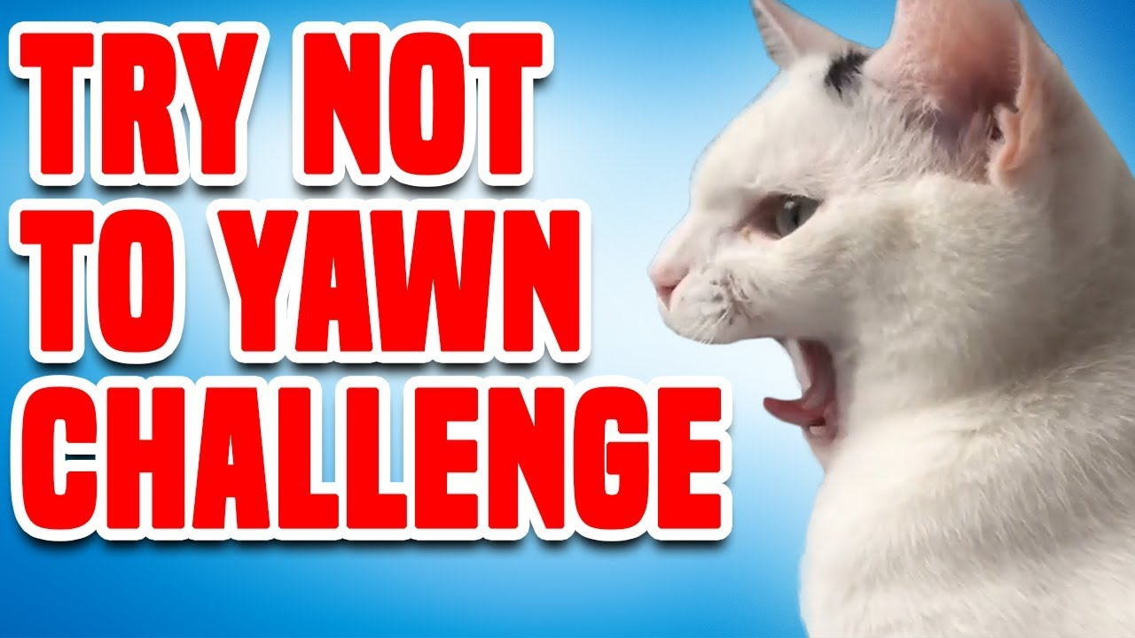 Try Not to Yawn Challenge | Funny Challenge Videos ...