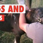 Animal Hugs and Kisses Compilation | XOXO