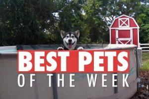 Best-Pets-of-the-Week-December-2017-Week-1