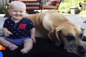 Big-Dog-Is-Excited-About-His-Baby-Brother-The-Dodo