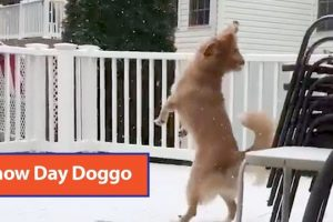 Dog-Tries-To-Catch-Snowfall