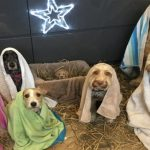 Dogs Who Are Obsessed With Christmas