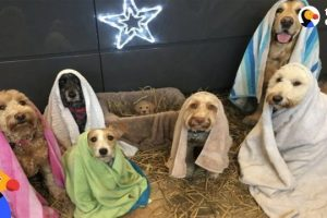 Dogs-Who-Are-Obsessed-With-Christmas-The-Dodo