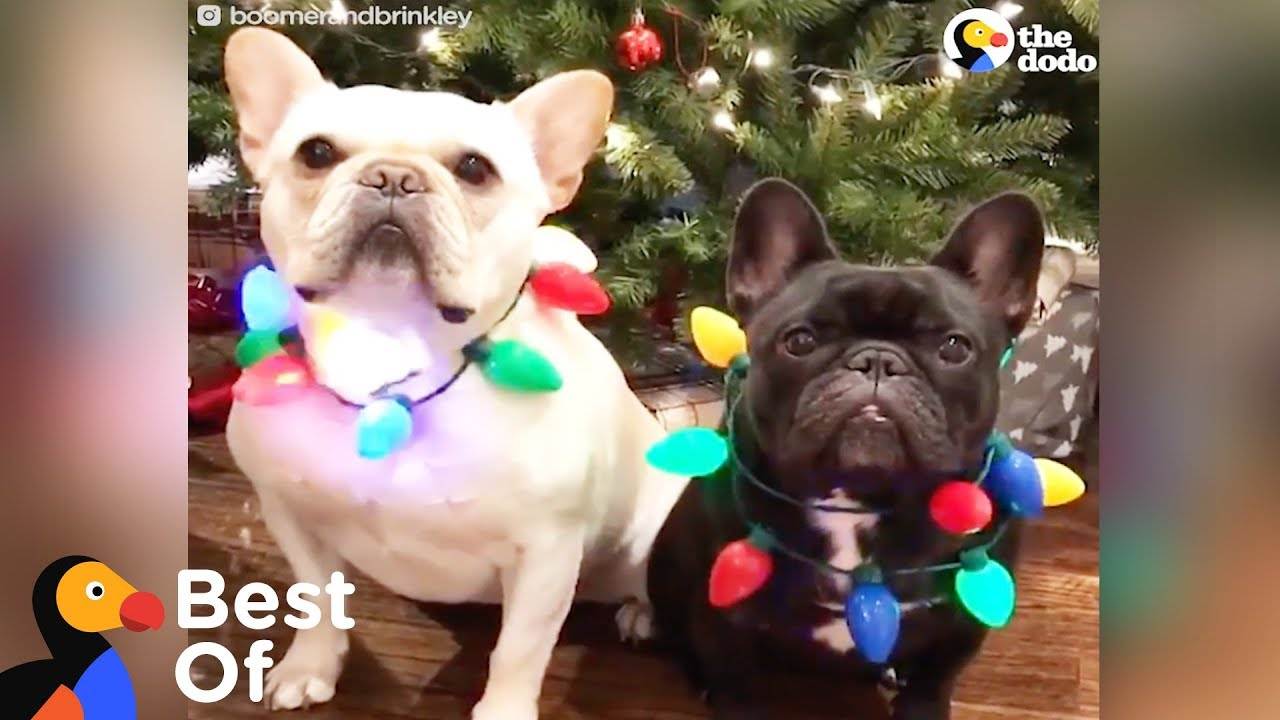 Dogs And Other Animals With Holiday Spirit 1funny Com