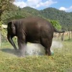 Elephant Breaks Sprinkler and Makes Their Own Fountain