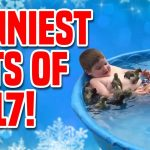 Funniest Pets Of 2017