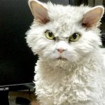 Grumpy Cat Illustrates The Stages Of Getting Through A Work Day | The Dodo
