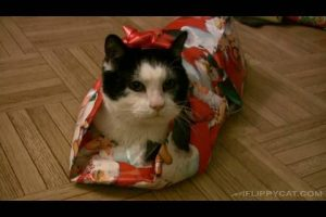 How-To-Wrap-A-Cat-For-Christmas