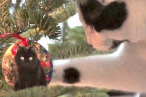 Im-Climbing-Up-The-Christmas-Tree-Neow-2012-version
