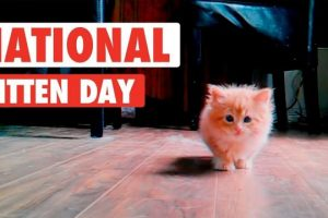 Most-Adorable-Kittens-National-Kitten-Day-2017