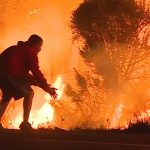 People Risk Lives To Save Animals From California Wildfires
