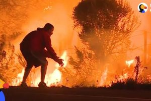 People-Risk-Lives-To-Save-Animals-From-California-Wildfires-The-Dodo