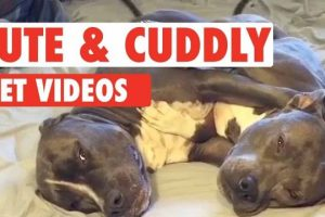 Pet-Who-Just-Want-Cuddles-Cute-and-Cuddly