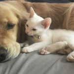 Spoiled Dog Welcomes Rescue Kitten Into Her Family