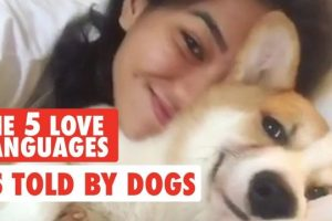 The-Five-Love-Languages-As-Told-By-Pets