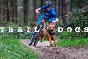Trail-Dogs