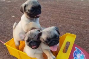 All-Aboard-the-Puppy-Train