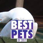 The Best Pet Videos of 2017