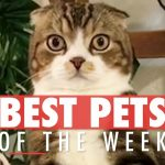 Best Pets of The Week Video Compilation | January 2018 Week 3