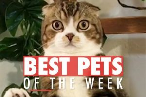 Best-Pets-of-The-Week-Video-Compilation-January-2018-Week-3
