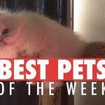 Best Pets of the Week | January 2018 Week 1