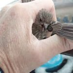 Bird Frozen To Metal Fence Rescued by Kind Man