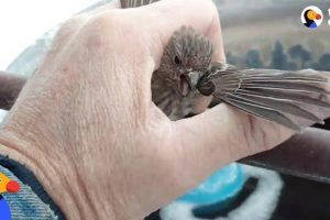 Bird-Frozen-To-Metal-Fence-Rescued-by-Kind-Man-The-Dodo