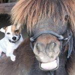 Dog and Horse Best Friends Are Inseparable