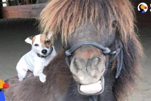 Dog-and-Horse-Best-Friends-Are-Inseparable-The-Dodo