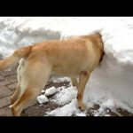Funniest Dogs Playing in Snow