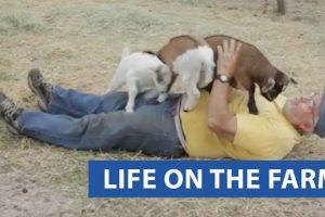 Life-On-The-Farm